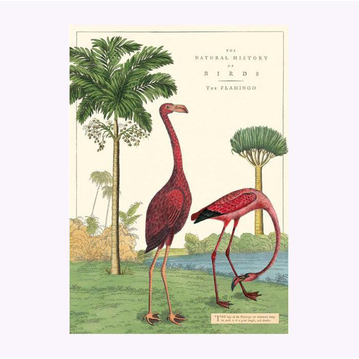 Affiche Flamant rose Cavallini