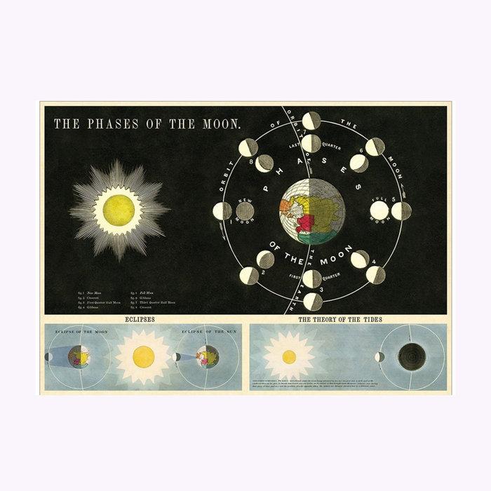 Cavallini Cavallini Moon Phases Poster