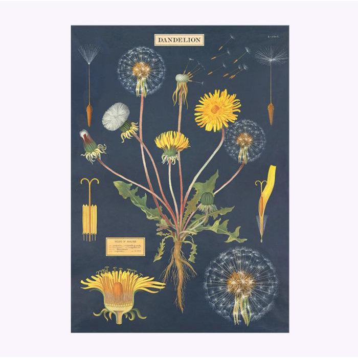 Cavallini Dandelion Poster
