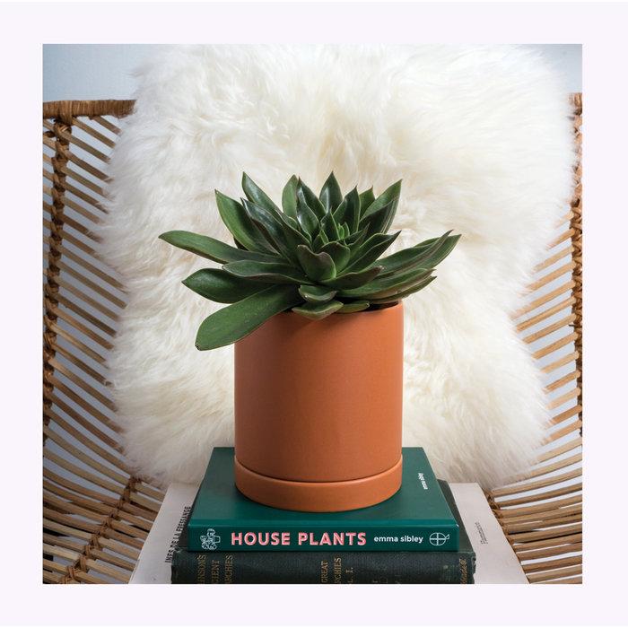 Accent Decor Romey Planter 5 x 5.75