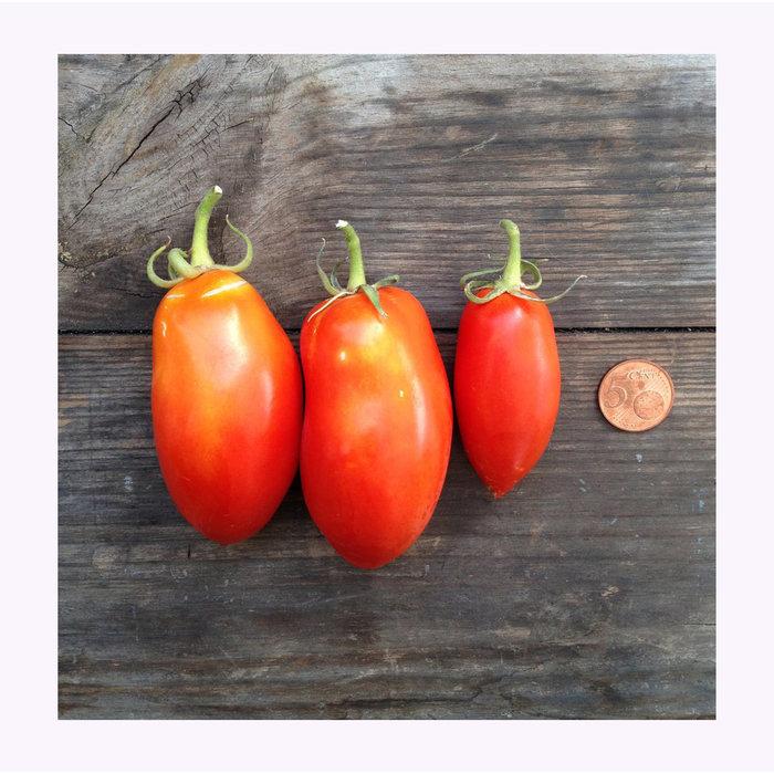 Semences de Fruits et Légumes Piccolo Seeds