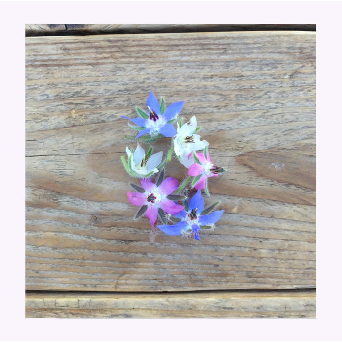 Piccolo Seeds Flower Seeds