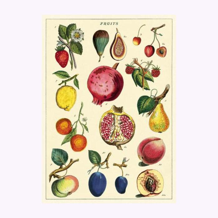 Cavallini Affiche Fruits 2 Cavallini
