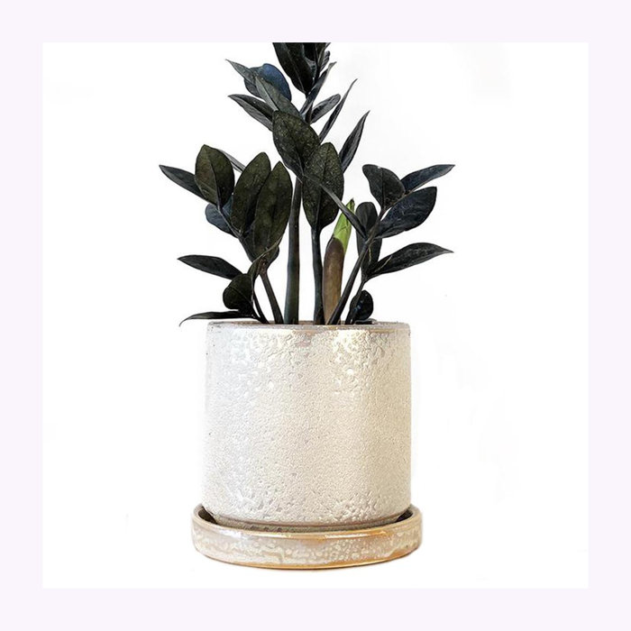 Chive Chive Ivory Speckles Big Minute Planter