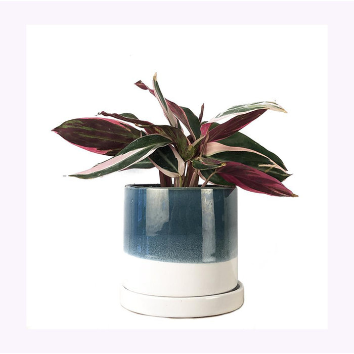 Chive Green Blue Minute Planter
