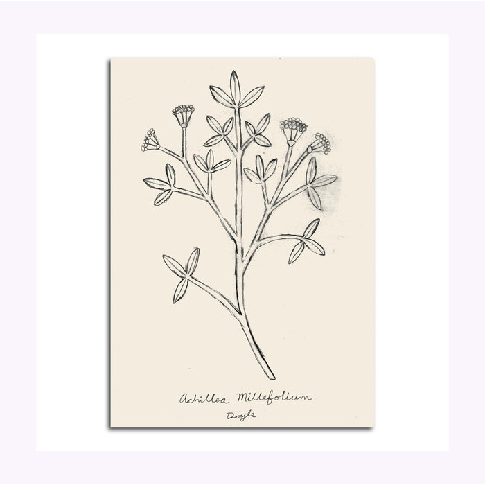 Carte Postale Drawing of a Weed Michael Doyle