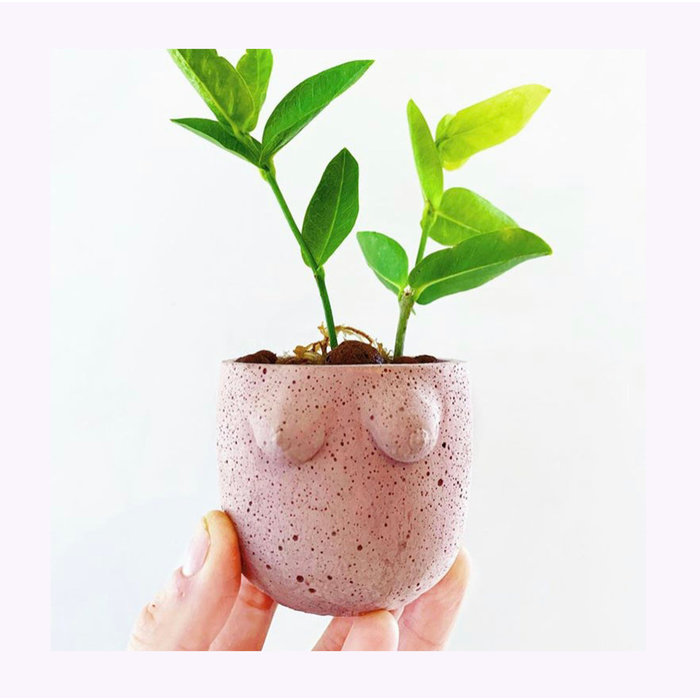 Cold Gold Small B-Cup Planter