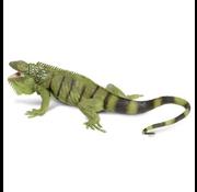 Safari Safari Iguana