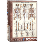 Eurographics Eurographics The Skeletal System Puzzle 1000pcs