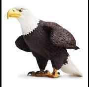 Safari Safari Bald Eagle