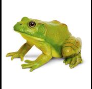 Safari Safari American Bullfrog