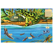 Cobble Hill Puzzles Cobble Hill Life Cycle of a Northern Leopard Frog Floor Puzzle 48pcs