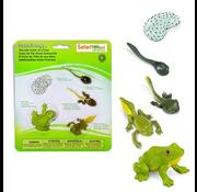Safari Safari Life Cycle of a Frog