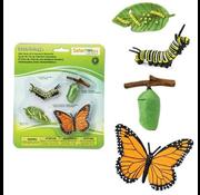 Safari Safari Life Cycle of a Monarch Butterfly