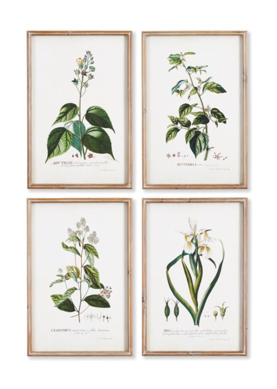 Flora Study Prints -Set of 4