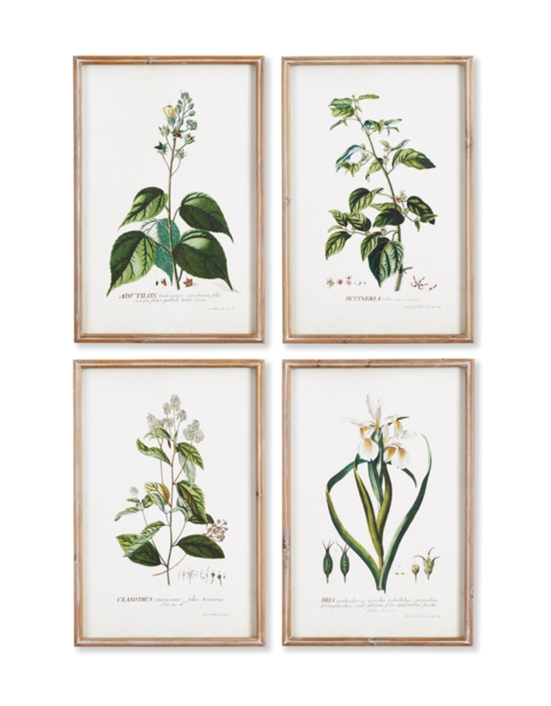 Flora Study-Set of 4