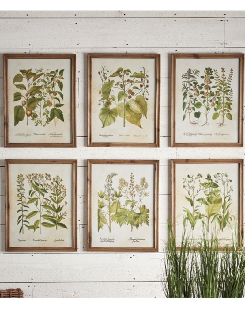 Wildflower Prints-Set of 4
