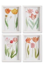 Tulip Prints-Set of 4