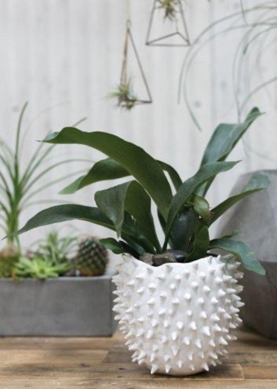 White Cacti Spike Pot | Large