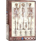 Eurographics Eurographics The Skeletal System Puzzle 1000pcs