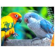 Playful Pastimes Playful Pastimes Parrots Puzzle 750pcs