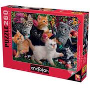 Anatolian Anatolian Kittens at Play Puzzle 260pcs
