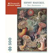 Pomegranate Pomegranate Ernst Haeckel: Sea Anemones Puzzle 500pcs