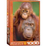 Eurographics Eurographics Orangutan & Baby Puzzle 1000pcs