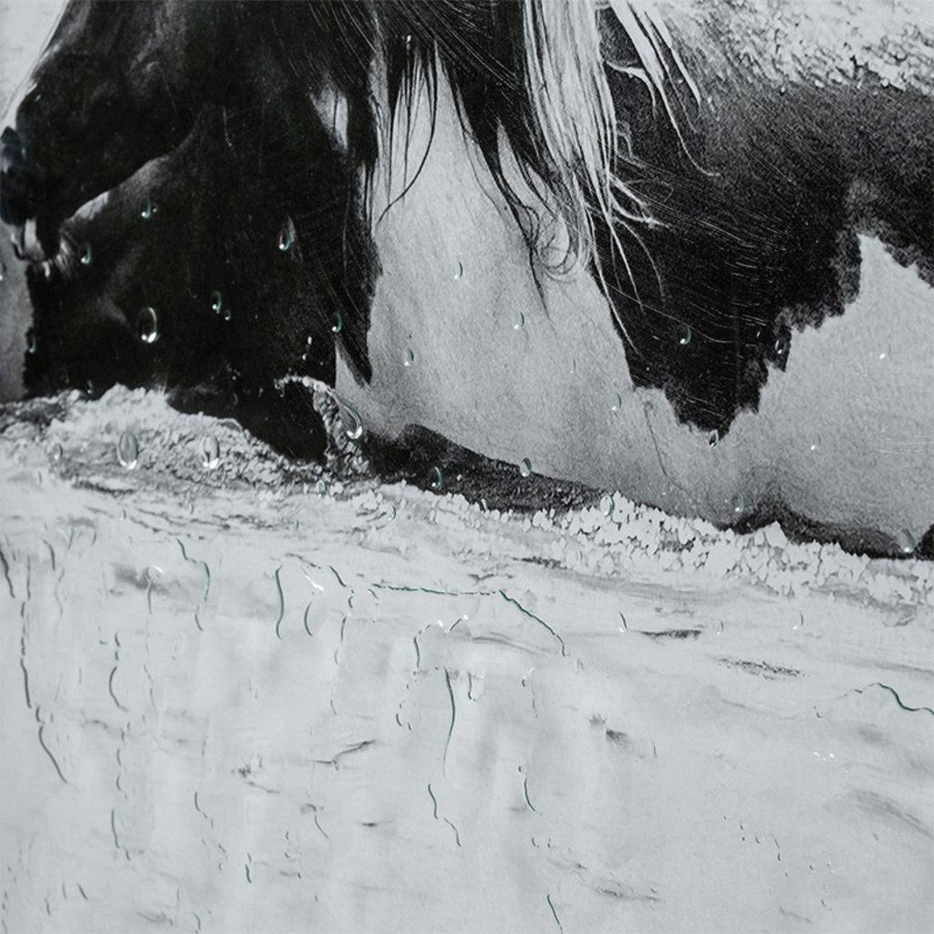 WATER HORSES GREYSCALE SET-2