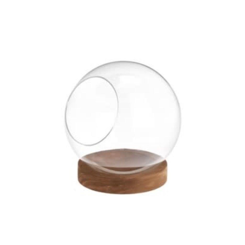 The Pine Centre Wood/Glass Terrarium