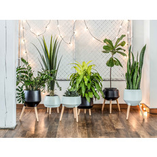 Style In Form Circa Mood Planter - Neo Mint