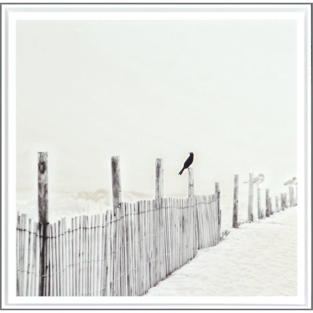 Celadon Blackbird on Fence
