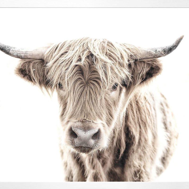 Celadon Highland Cow