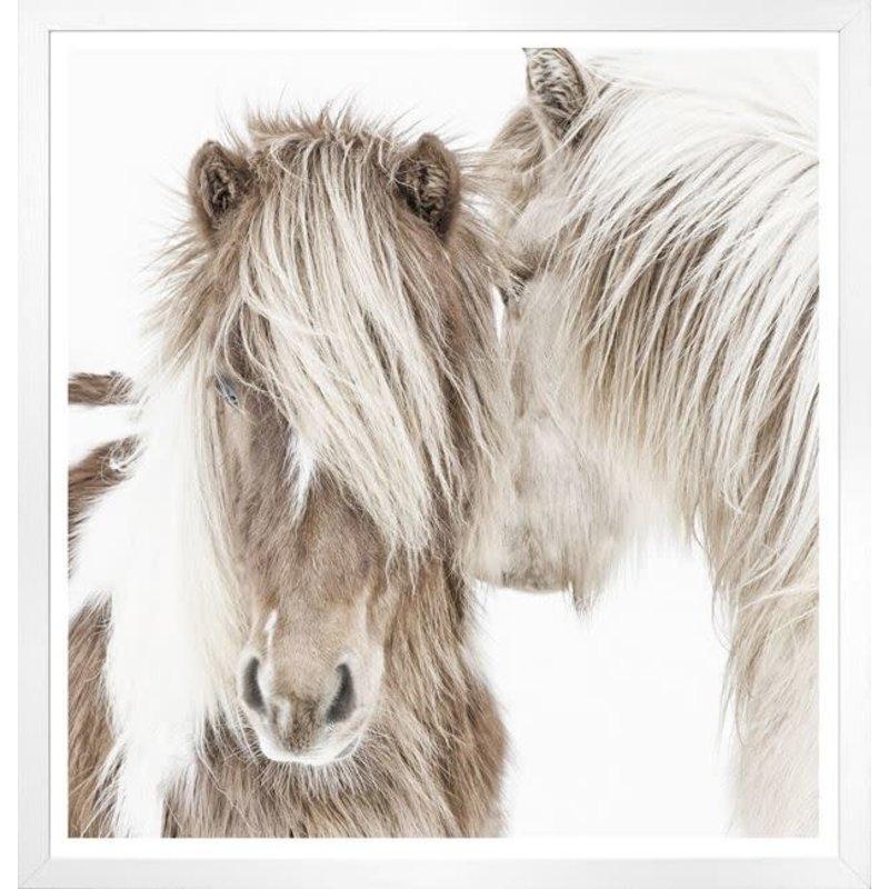 Celadon Icelandic Ponies