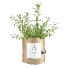 Potting Shed Creations Garden in a Bag   Lavender