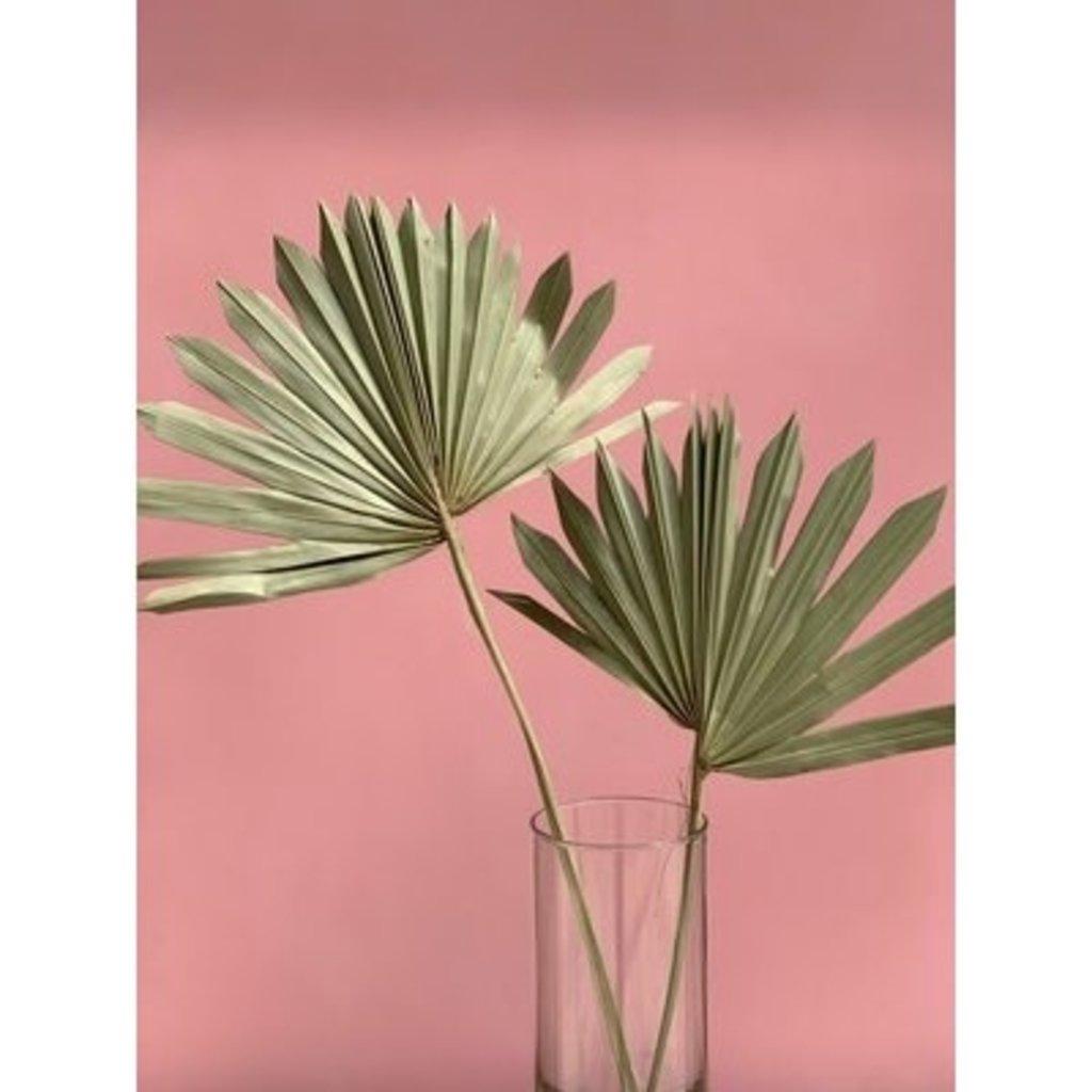 Fleurs Flowers Fan Palm - Natural