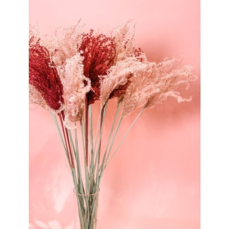 Fleurs Flowers Miscanthus Grass | Blush