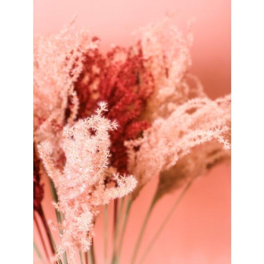 Fleurs Flowers Miscanthus Grass   Roseberry