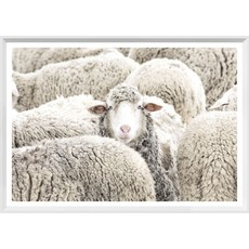 Mod. Farm - One in the Crowd - Mini - White