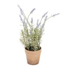 The Pine Centre Lavender Plant
