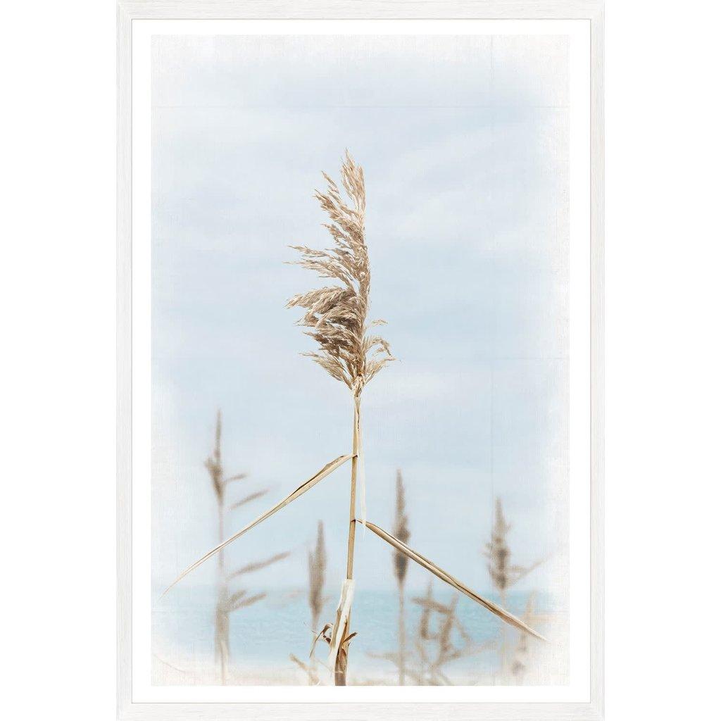 Celadon Dune Grass - Center