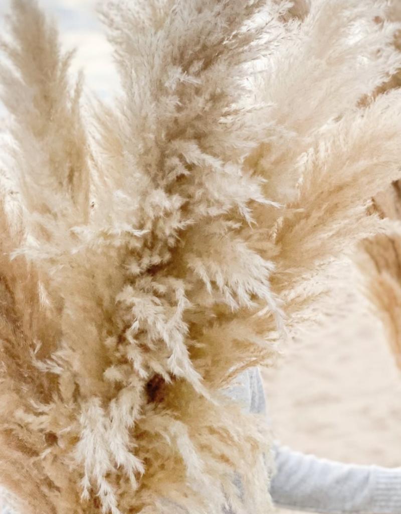 Pampa bianca géante - nude