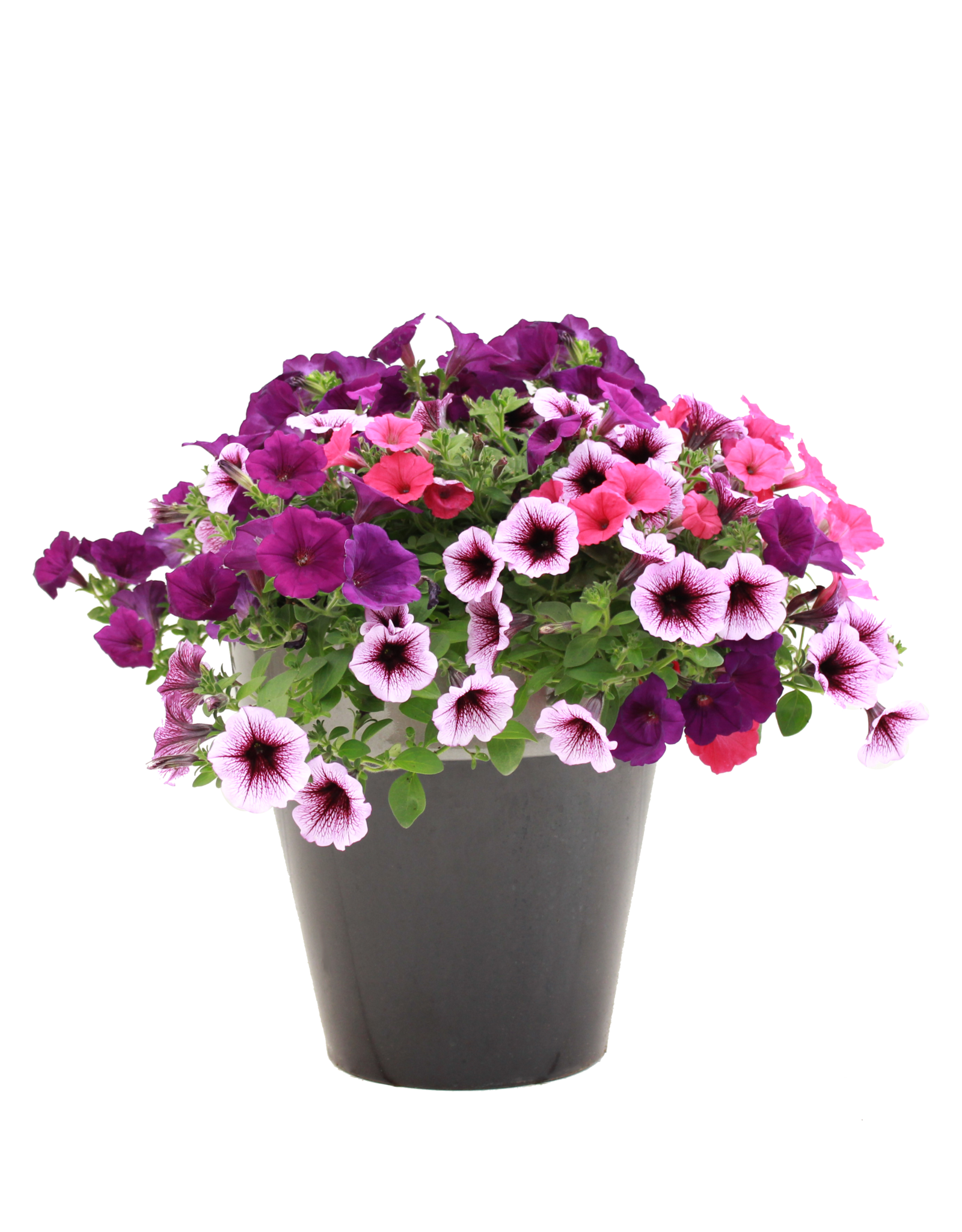 "Exclusive Patio Pot 12""-Assorted Colors & Styles"