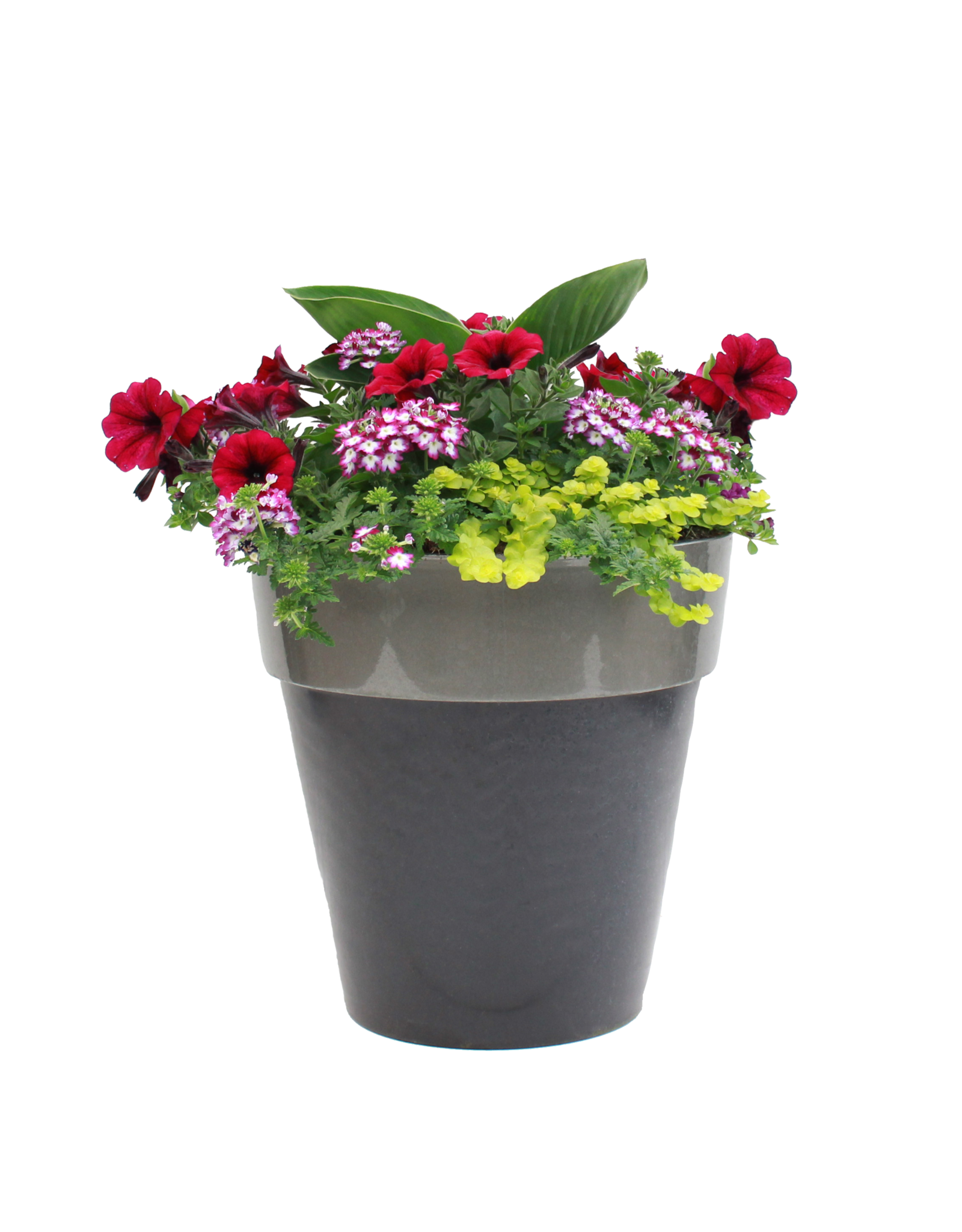 """Exclusive Patio Pot 14""""-Assorted Colors & Styles"""