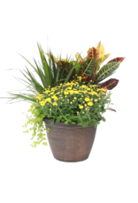 """Harvest Planter-12""""-assorted colors and styles"""