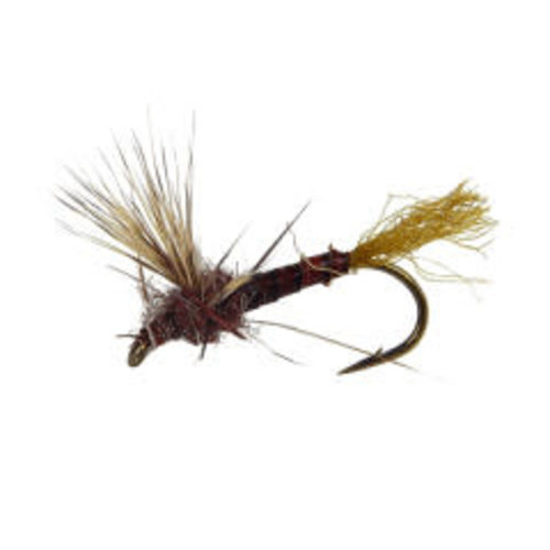 Holly Flies Sparkle Dun Hendricson Male