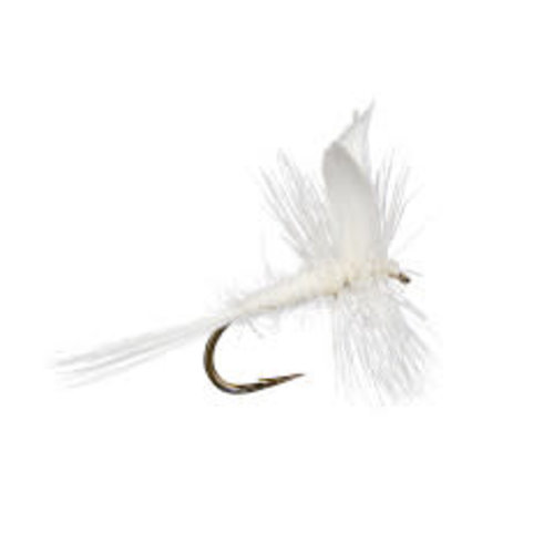 White Fly -Dusty's