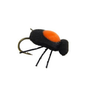 Quicksight Beetle