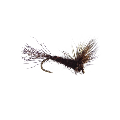Sparkle Dun-Hendrickson