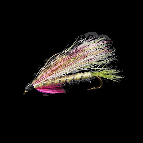 Little Rainbow Trout